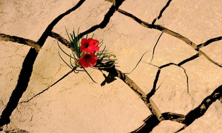 fiore dal deserto